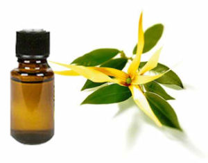 Ylang Ylang essential oil for stress