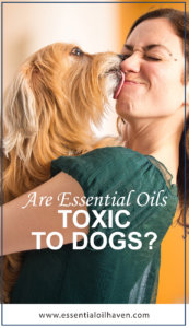 Are Essential Oils Toxic to Dogs?