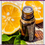 Essential Oil Companies Rewards Programs Comparison