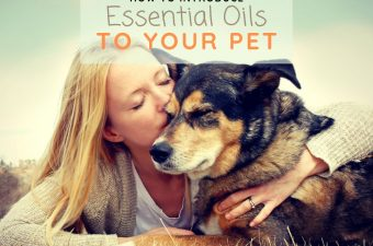 Aromatherapy for pets introduction